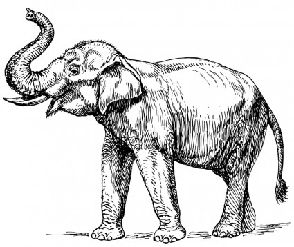 Confront, Don't Sprint From, The Elephant In The Room.